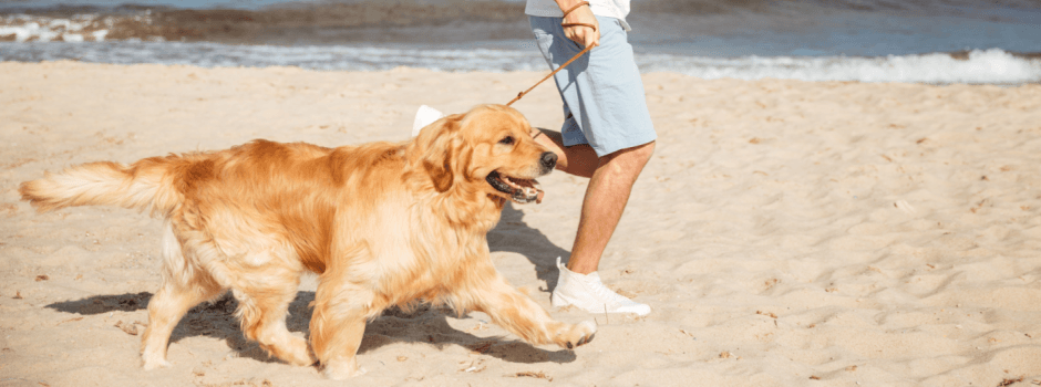 Dog running on the beach with its owner